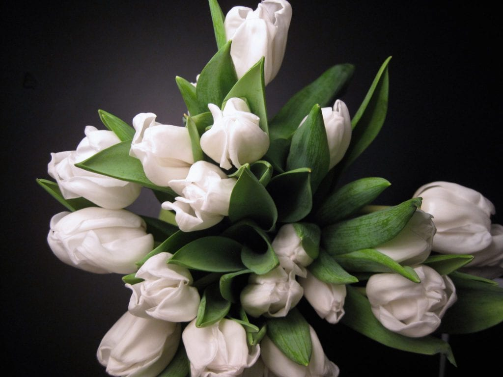 blomster, tulipaner, tulipan, flowers, selvforkælelse