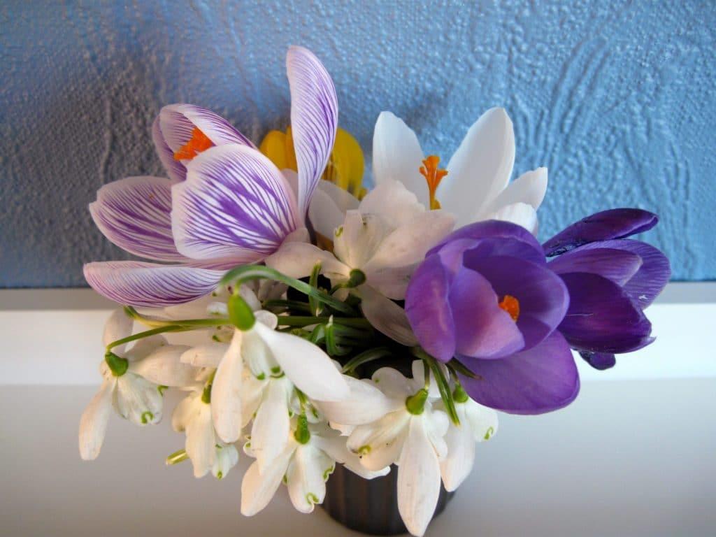 forår, blomster, vintergækker