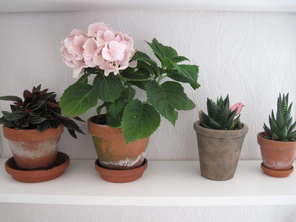 planter, grønt,