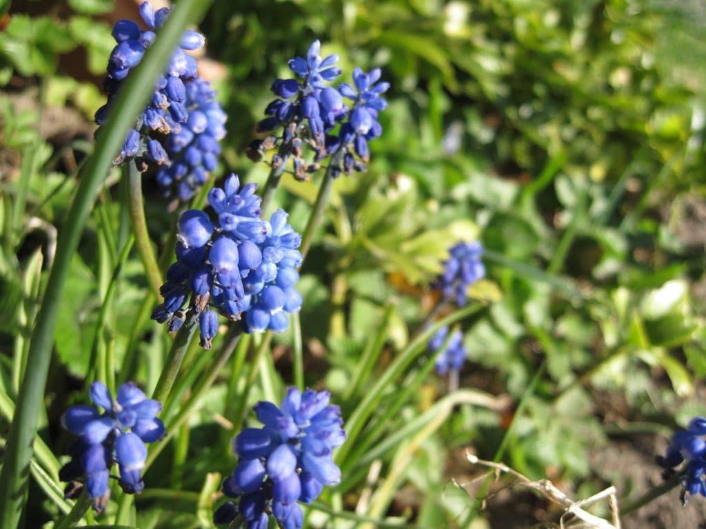 blomster, haven, farver, smukt, forår