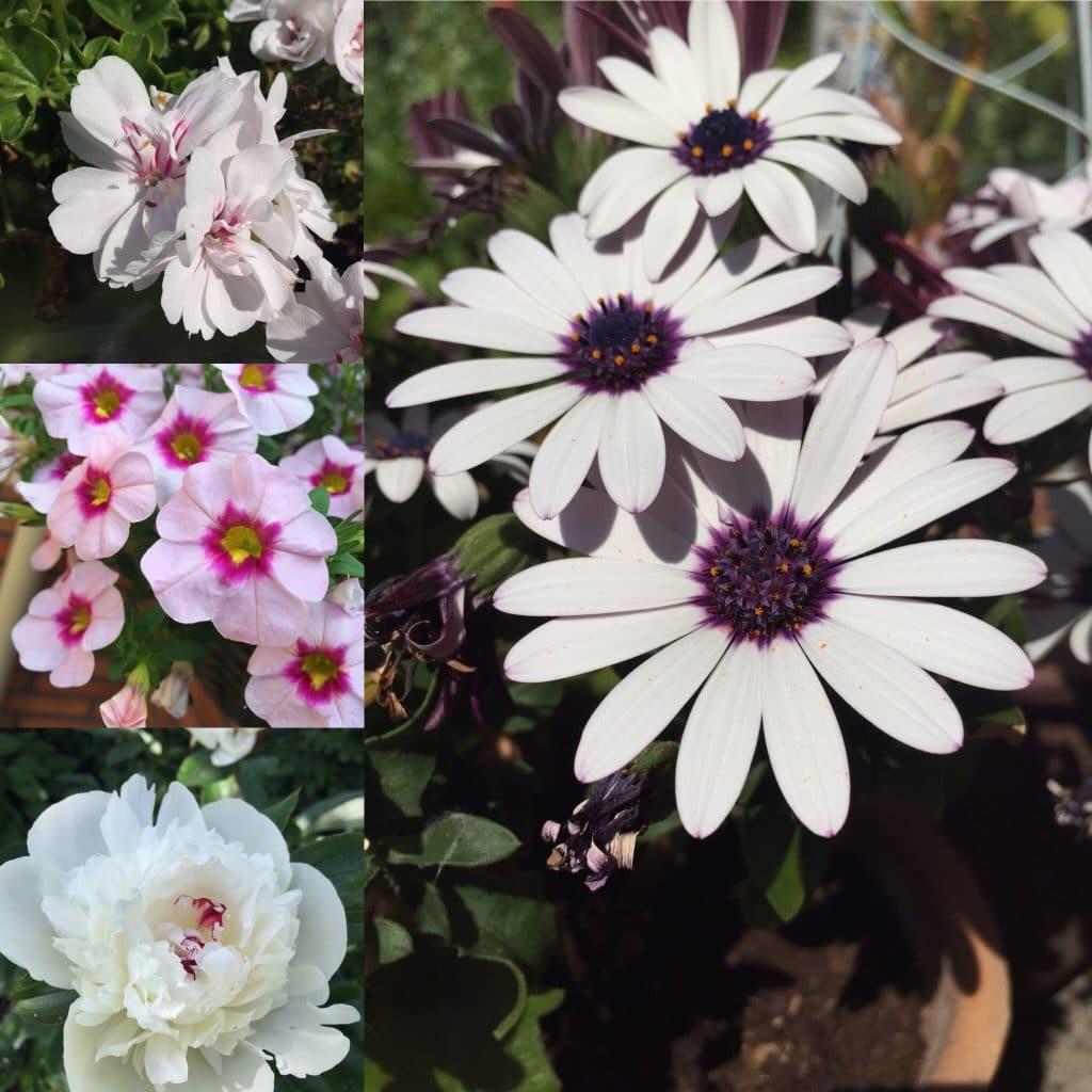 simplicity, blomster, flowers, flower, summer, sommer