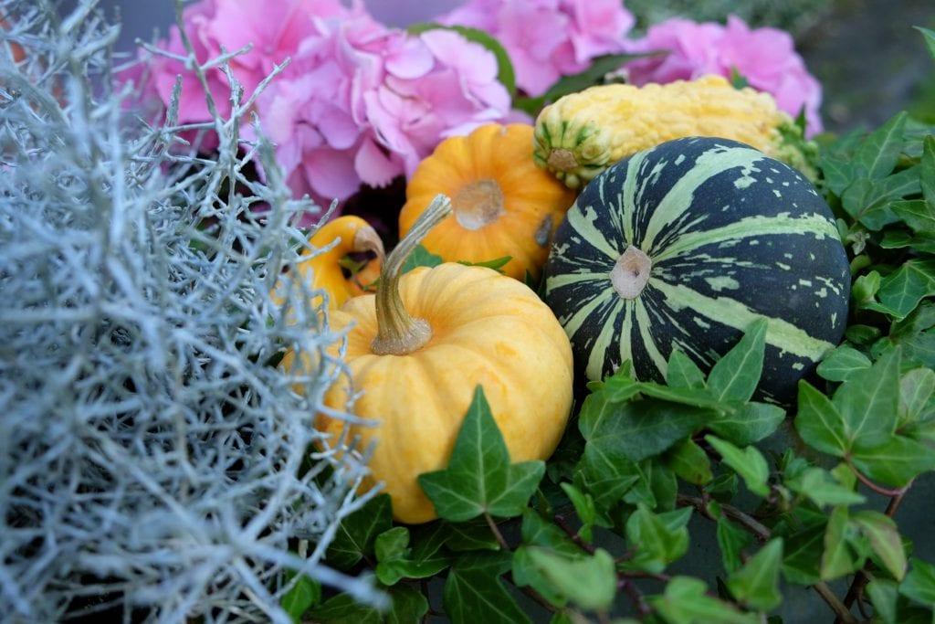 pyntegræskar, haven, efterår, fall
