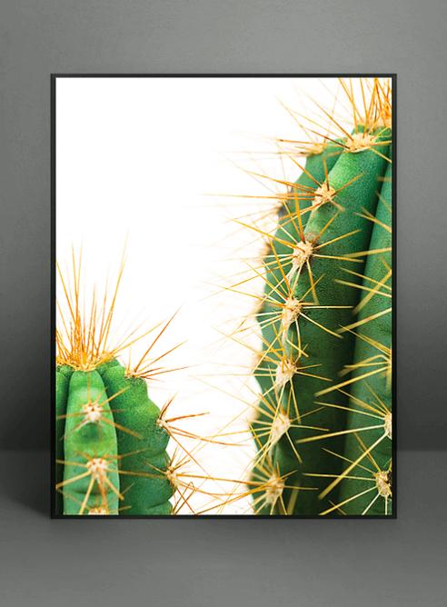 Men's lounge, kaktus, chocolate, plakat, poster