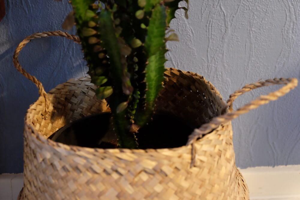 Nyt til boligen – billig kurv til planten