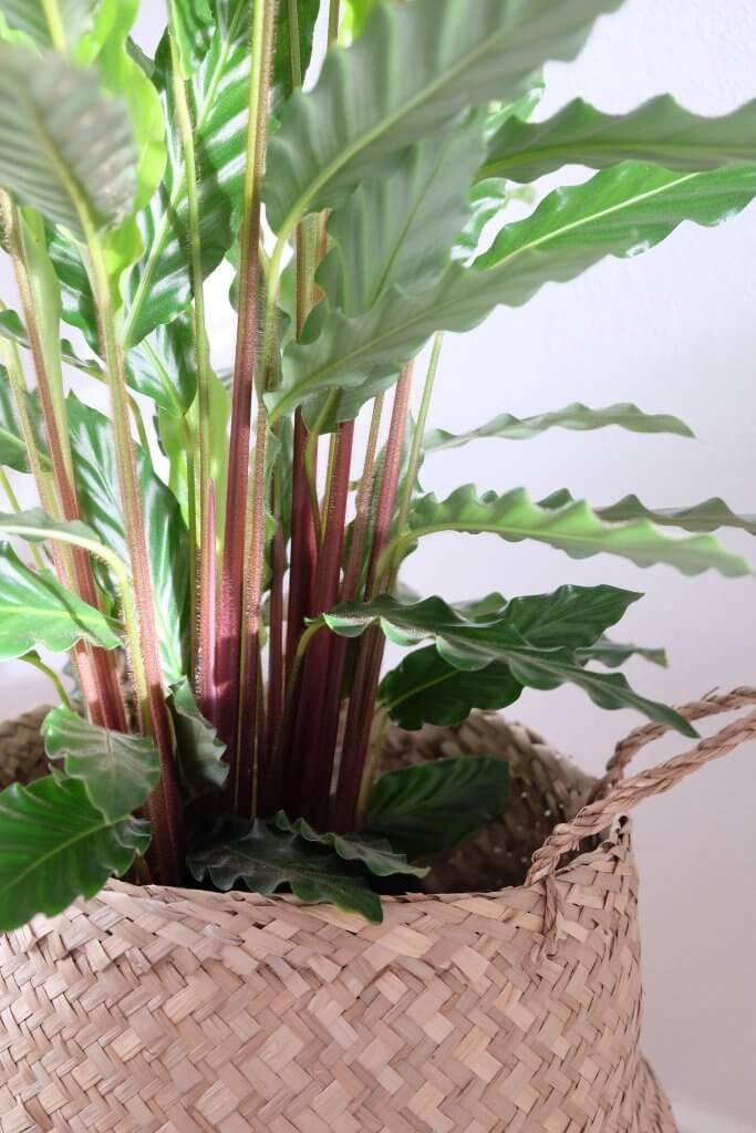 junglefeber, jungle, urban jungle, grønne planter