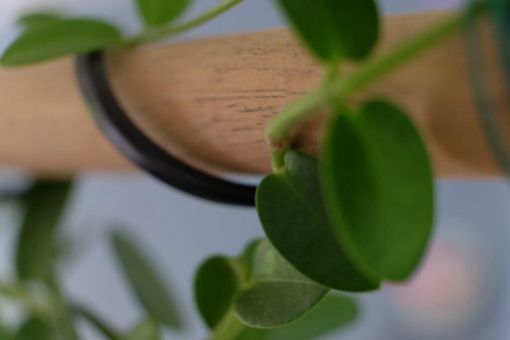 planter, lamper, spisebordet, jungle, grønt, planter over spisebordet