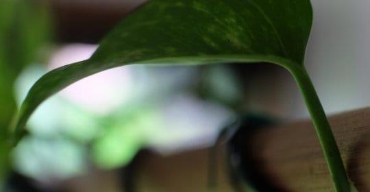 planter, lamper, spisebordet, jungle, grønt,